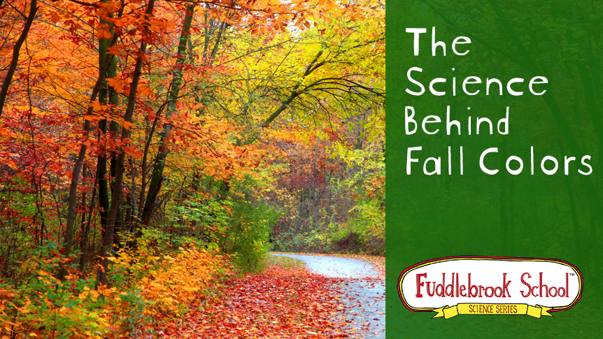 The Science Behind Fall Colors