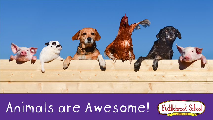 Animals are Awesome!