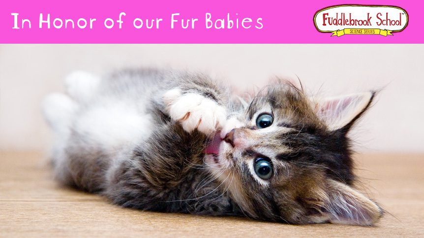 In Honor of our Fur Babies